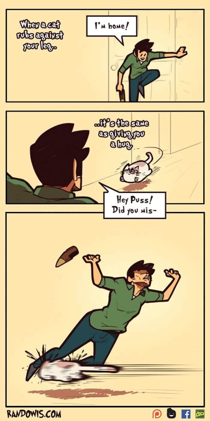 funny comic - Cartoon - Whey a cat ubs agaiyst four lego I'M hoMe! it's the same asgivivyoo Hey Puss! Did you Mis- RAMDOWIS.COM
