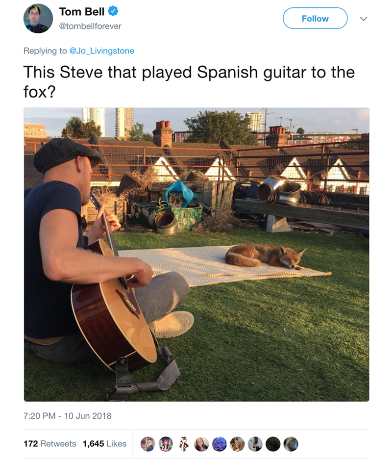 fox sunbathing - Website - Tom Bell Follow @tombellforever Replying to @Jo_Livingstone This Steve that played Spanish guitar to the fox? 7:20 PM 10 Jun 2018 172 Retweets 1,645 Likes