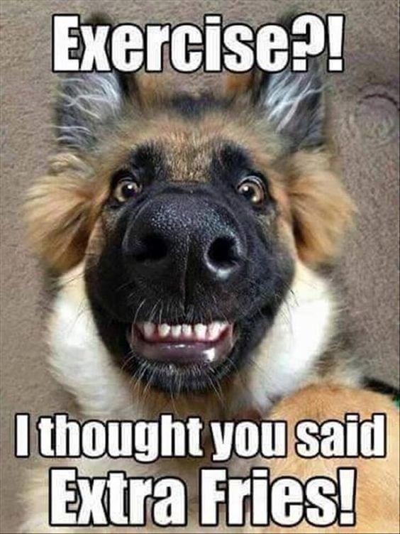 close up german shepherd face extra fries dog meme