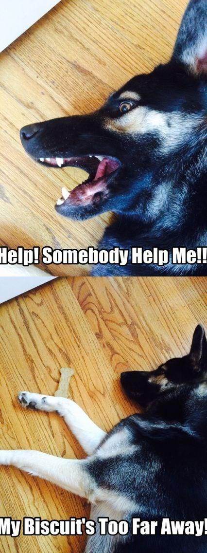 german shepherd lying on ground help me biscuit too far away dog meme