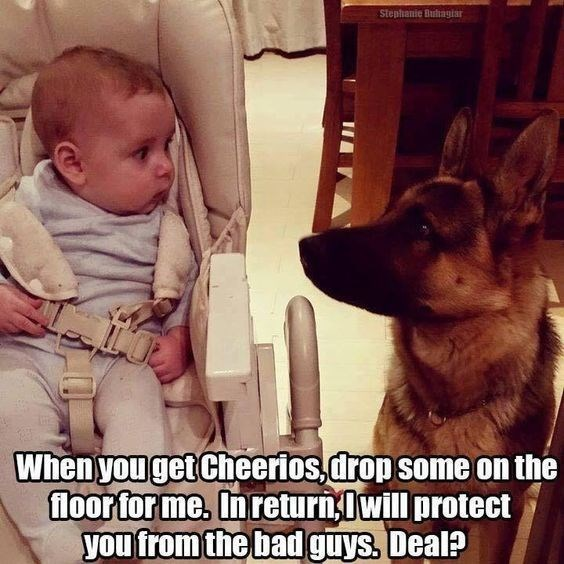 german shepherd and baby looking at each other dog memes