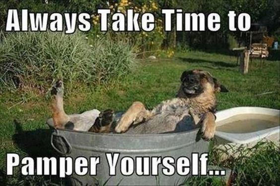 german shepherd having bath in big metal bath tub outside in grassy garden dog memes