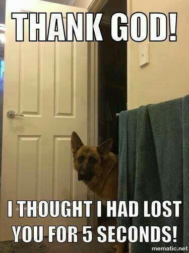 german shepherd looking around corner of door dog memes