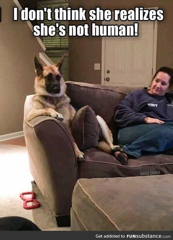 25 Goofy Memes Of German Shepherds That Will Make You Laugh All