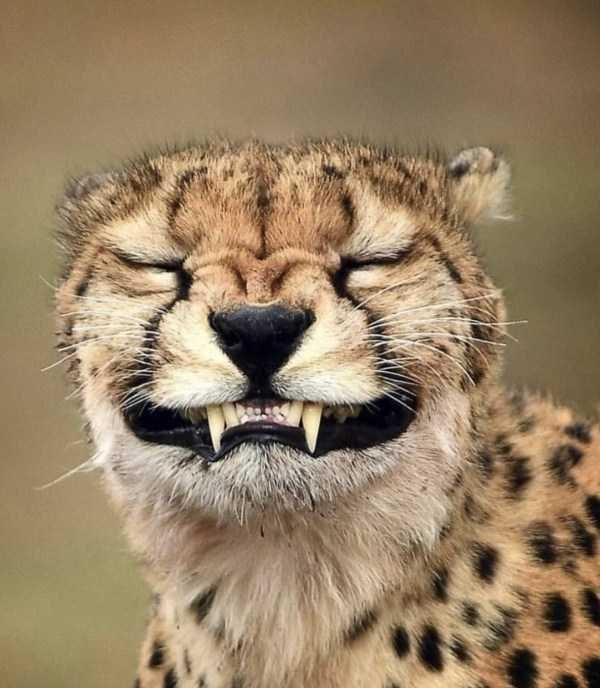 cat photos, animal photos