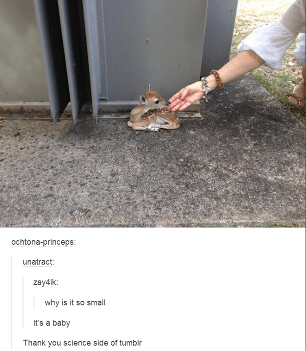 someone's hand reaching out to touch a tiny baby deer sitting next to a building why is it so small it's a baby