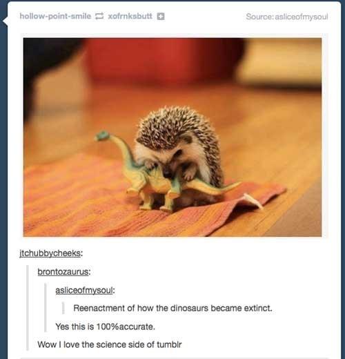 baby hedgehog eating tiny dinosaur figurine reenactment of how the dinosaurs went extinct