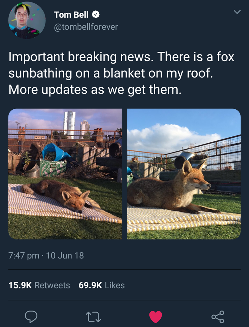 Adaptation - Tom Bell @tombellforever Important breaking news. There is a fox roof sunbathing on a blanket on my More updates as we get them. 7:47 pm 10 Jun 18 15.9K Retweets 69.9K Likes
