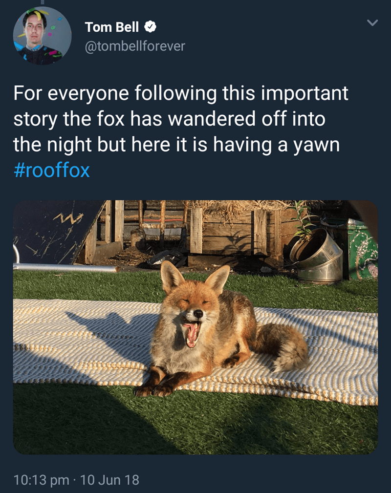 Canidae - Tom Bell @tombellforever following this important story the fox has wandered off into the night but here it is having a yawn For everyone #rooffox 10:13 pm 10 Jun 18