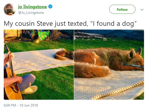 "Product - jo livingstone @Jo_Livingstone Follow My cousin Steve just texted, ""I found a dog"" ১৯ 6:08 PM - 10 Jun 2018"