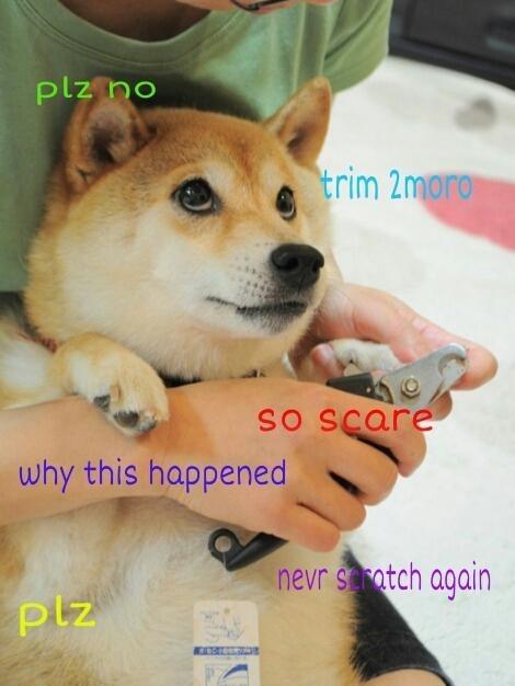 meme - Dog - plz no trim 2moro So Scare why this happened nevr satch again plz