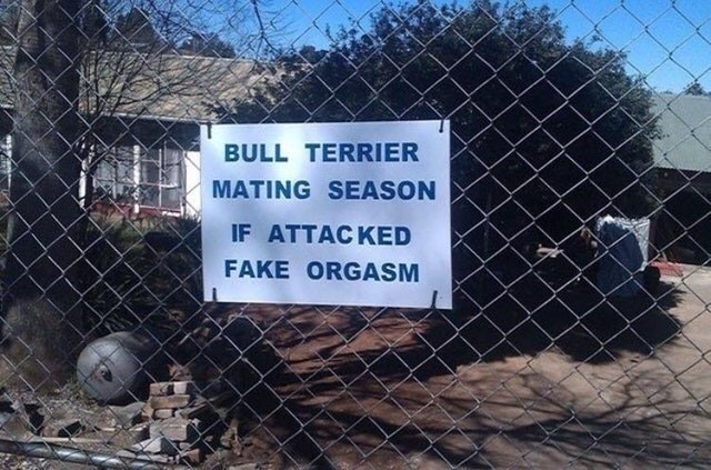 Wire fencing - BULL TERRIER MATING SEASON IF ATTACKED FAKE ORGASM