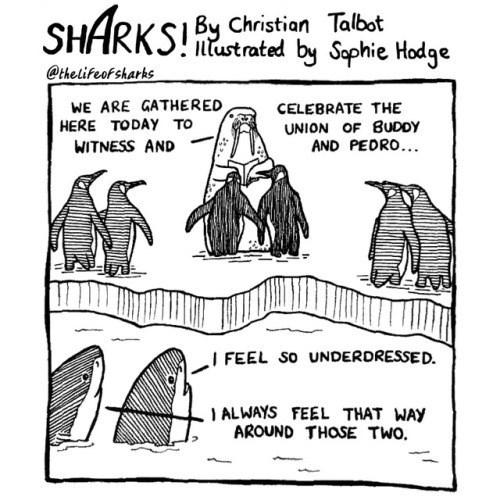 Text - SHARKS Christion Talbst by Sephie Hodge ntustrated @thelifeof sharks WE ARE GATHERED HERE TODAY TO WITNESS AND CELEBRATE THE UNION OF BUDDY AND PEDRO.. I FEEL SO UNDERDRESSE D. 1 ALWAYS FEEL THAT WAY AROUND THOSE TWO.