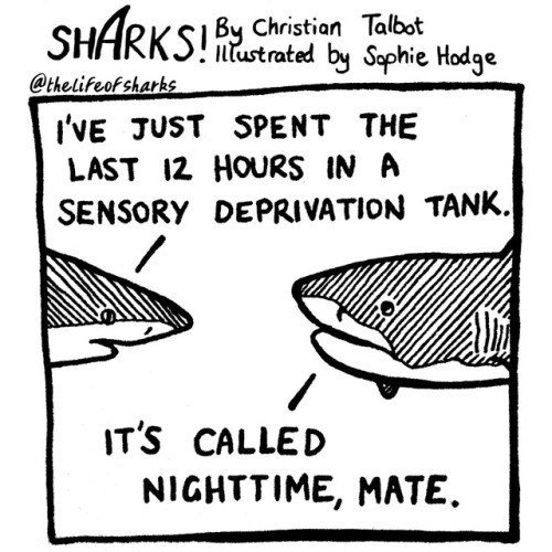 Text - SHARKSChristion Talbst by Saphie Hodge ntustrated @thelifeofsharks I'VE JUST SPENT THE LAST 12 HOURS IN A SENSORY DEPRIVATION TANK. IT'S CALLED NIGHTTIME, MATE