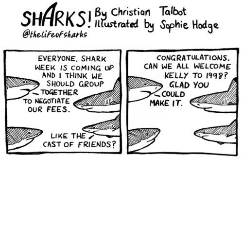 Organism - SHARKS Christion Talbat by Saphie Hodge ntustrated @thelifeofsharks CONGRATULATIONS CAN WE ALL WELCOME KELLY TO 1998? GLAD YOU COULD MAKE IT EVERYONE. SHARK WEEK IS COMING UP AND I THINK WE SHOULD GROUP TOGETHER TO NEGOTIATE oUR FEES LIKE THE CAST OF FRIENDS?