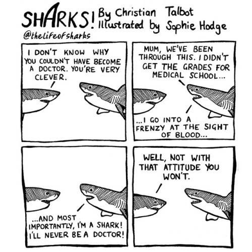 Fish - SHARKS Christion Talbst @the lifeof sharks ntustrated by Sephie Hodge MUM, WE'VE BEEN THROUGH THIS.I DIDN'T GET THE GRADES FOR MEDICAL SCHOOL... I DON'T KNOW WHY YOU COULDN'T HAVE BECOME A DOCTOR. You'RE VERY CLEVER ..I Go INTO A FRENZY AT THE SIGHT OF BLOOD.. WELL, NOT WITH THAT ATTITUDE You WON'T. ...AND MOST IMPORTANTLY, IM A SHARK! i'LL NEVER BEA DOCTOR!