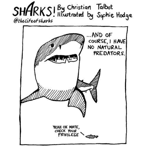 Cartoon - SHARKSI Christion Talbat by Saphie Hodge ntustrated @thelifeof sharks ...AND OF COURSE, I HAVE No NATURAL PREDATORS. YEAH OK MATE, CHECK YOUR PRIVILEGE