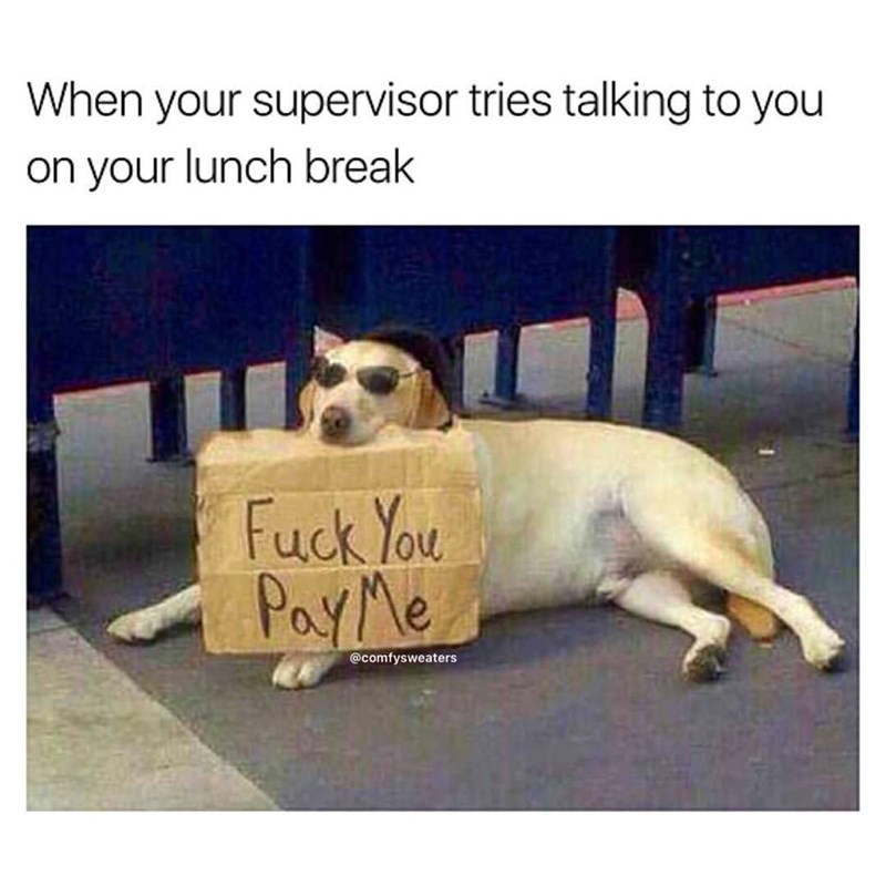 "Caption says, ""When your supervisor tries talking to you on your lunch break,"" with an image of a dog holding a sign that says, ""Fuck you, pay me"""