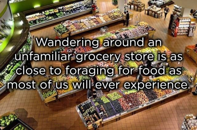 Supermarket - Wandering around an unfamiliaragrocery store is as close to foraging .for food as most of us wil ever experience