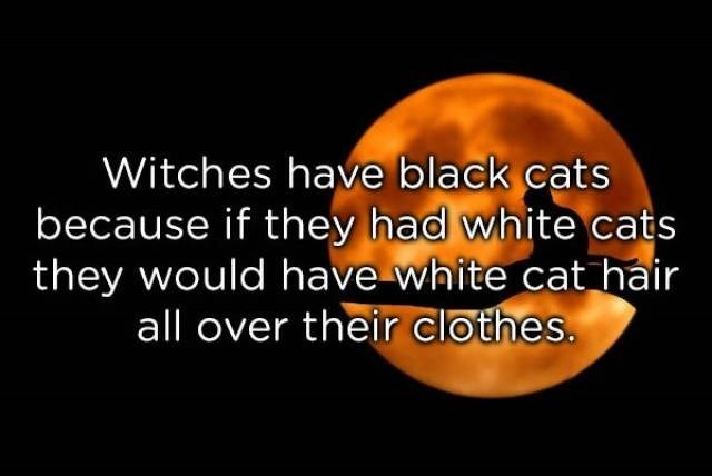 Text - Witches have black cats because if they had white cats they would have white cat hair all over their clothes.