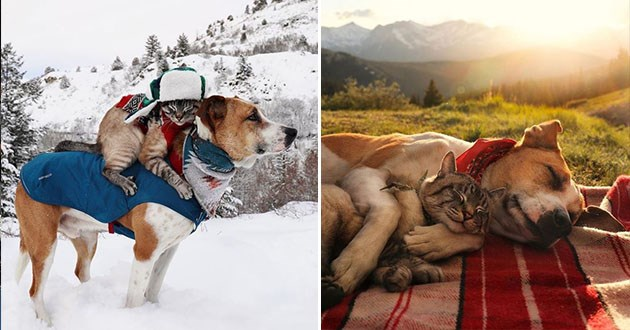 cat dog instagram adventure