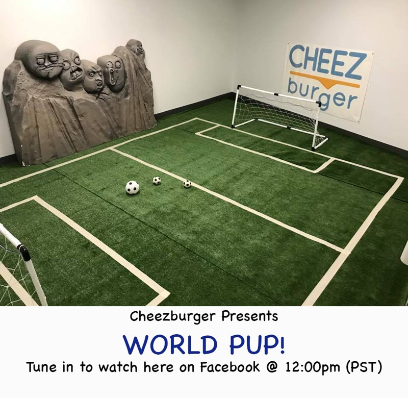 funny puppies dogs adorable puppies world cup cute live stream soccer soccer game world pup funny - 9176945920