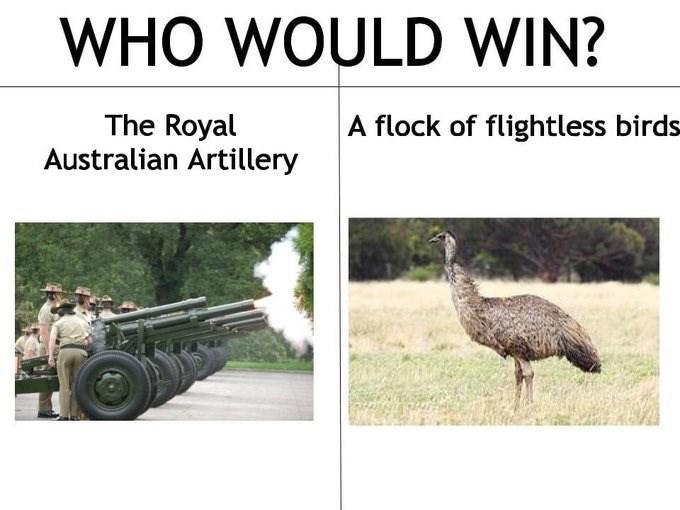 dank memes-who would win Australian artillery and birds