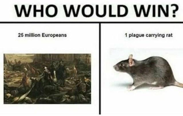 dank memes - Rat - WHO WOULD WIN? 25 million Europeans 1 plague carrying rat