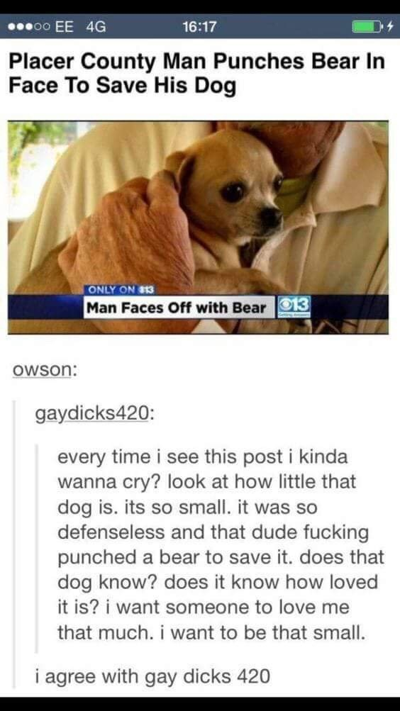 Dog - oo EE 4G 16:17 Placer County Man Punches Bear In Face To Save His Dog ONLY ON $13 Man Faces Off with Bear 3 OWSon: gaydicks420: every time i see this post i kinda wanna cry? look at how little that dog is. its so small. it was so defenseless and that dude fucking punched a bear to save it. does that dog know? does it know how loved it is? i want someone to love me that much. i want to be that small. i agree with gay dicks 420