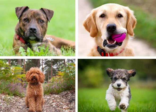Dog breeds study