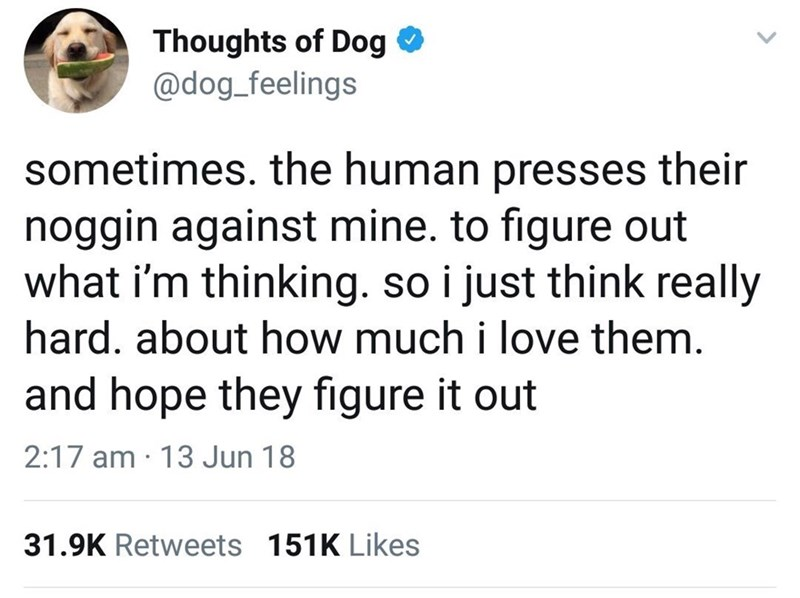 Text - Thoughts of Dog @dog_feelings sometimes. the human presses their noggin against mine. to figure out what i'm thinking. so i just think really hard. about how much i love them. and hope they figure it out 2:17 am 13 Jun 18 31.9K Retweets 151K Likes
