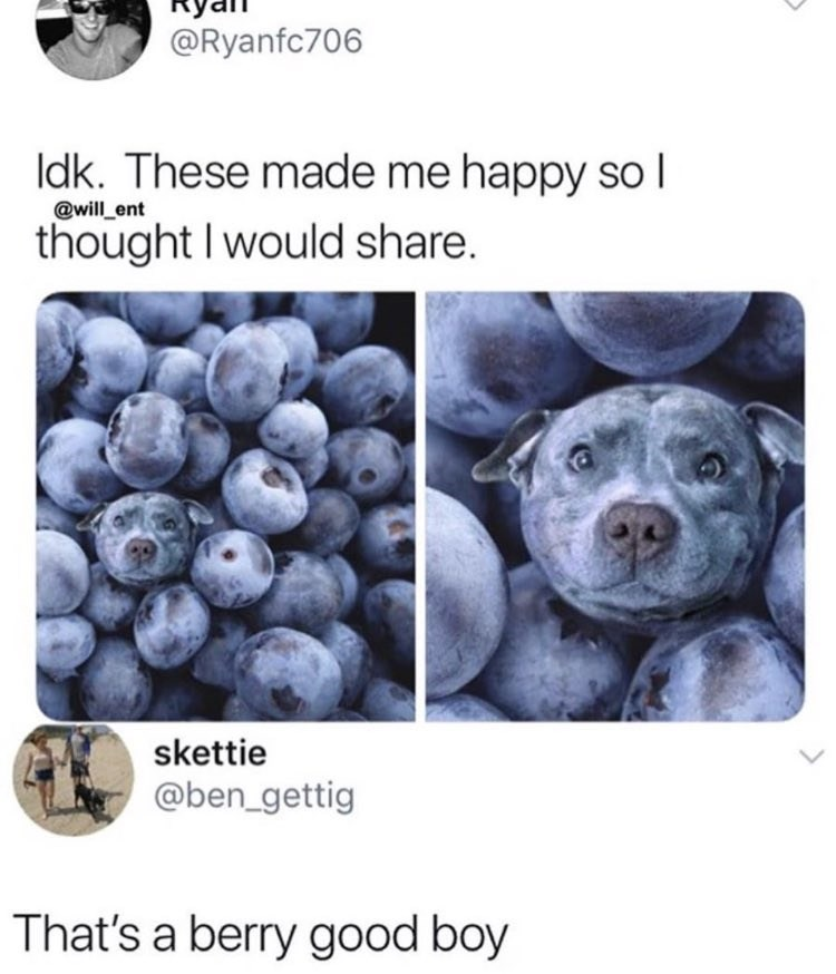 Blueberry - @Ryanfc706 Idk. These made me happy soI @will ent thought I would share. skettie @ben_gettig That's a berry good boy