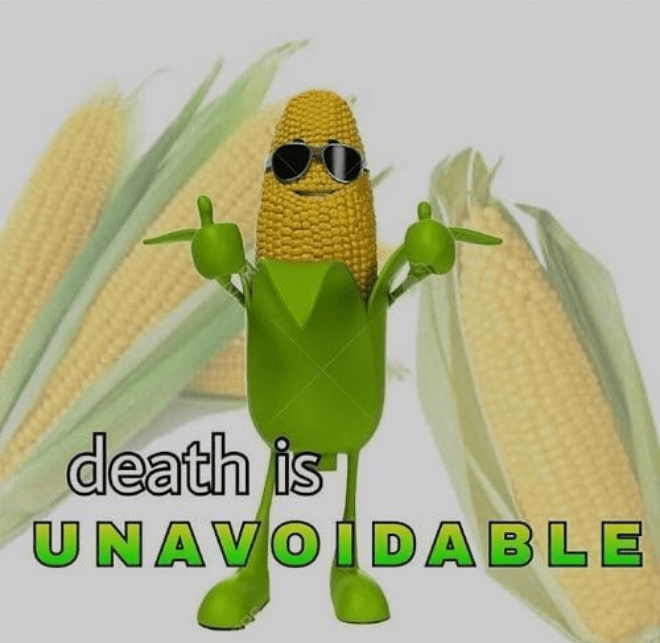 Corn on the cob - death is UNAVOIDABLE