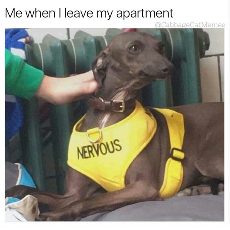 Dog - Me when I leave my apartment @CabbageCatMemes NERVOUS