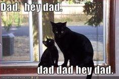 father's day animals - Cat - Dad hey dad. dad dad hey dad.