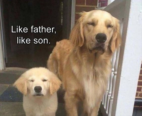 father's day animals - Dog - Like father, like son.
