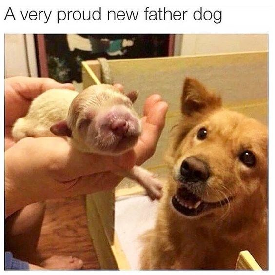 father's day animals - Dog - A very proud new father dog