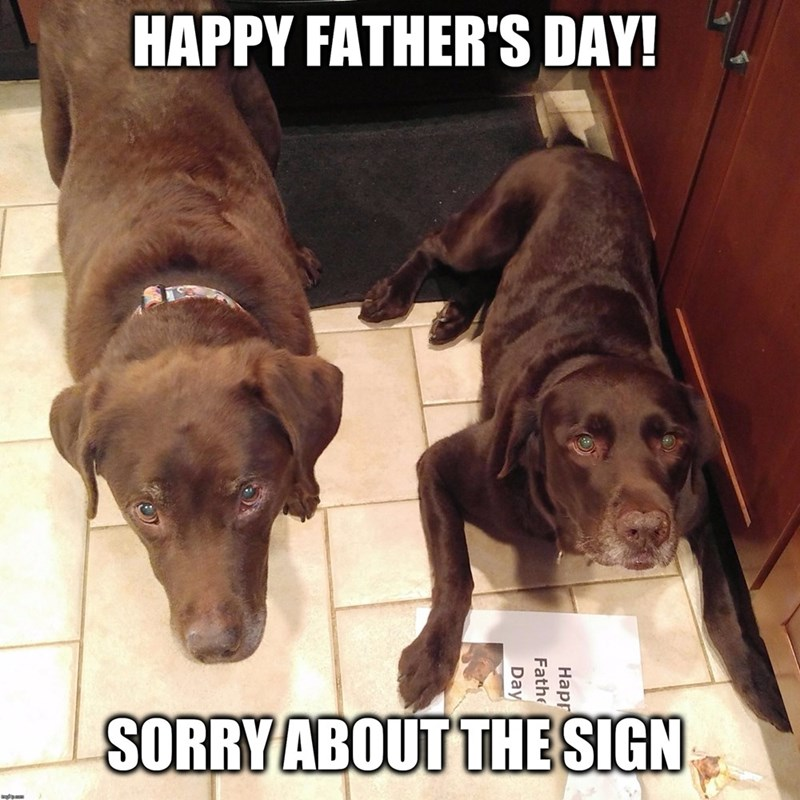 father's day animals - Dog - HAPPY FATHER'S DAY! SORRY ABOUT THE SIGN