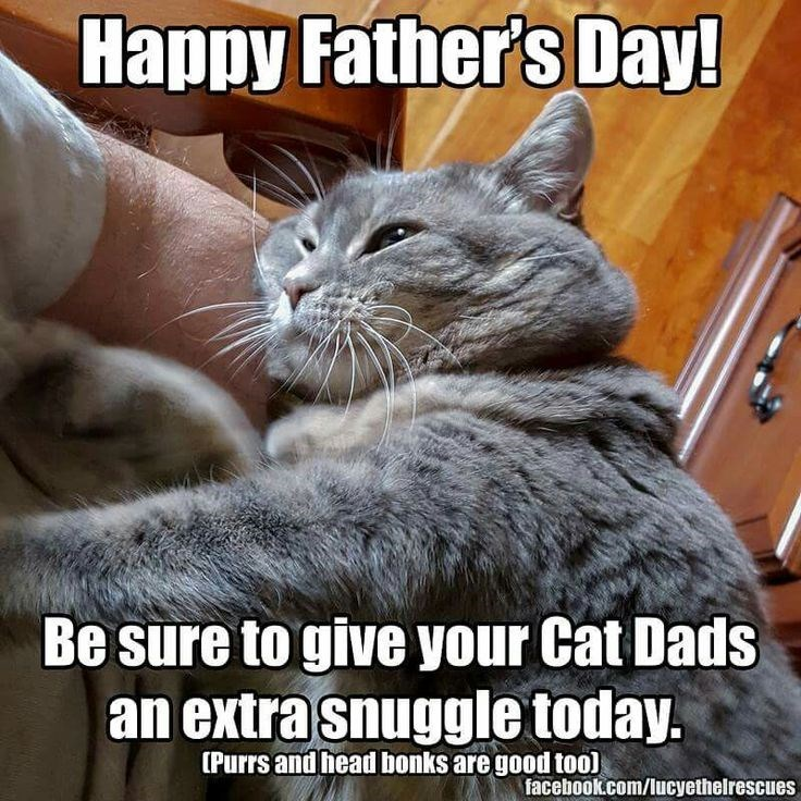 father's day animals - Cat - Happy Father's Day! Be sure to give your Cat Dads an extra snuggle today. [Purrs and head bonks are good to0) facebook.com/lucyethelrescues