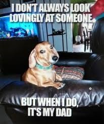 father's day animals - Dog - IDONTALWAYS LOOK LOVINGLY AT SOMEONE BUTWHENTDO ITS MY DAD
