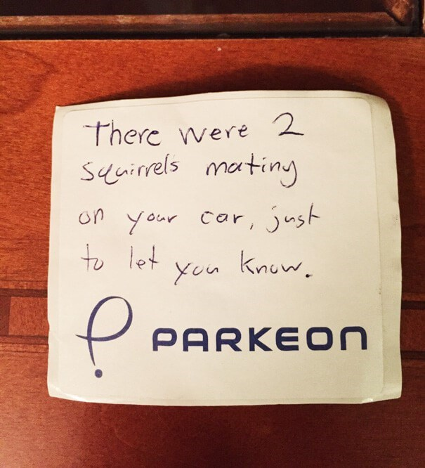 Text - There were 2 sinrels mating on your Car, just to let yen knuw PARKEON