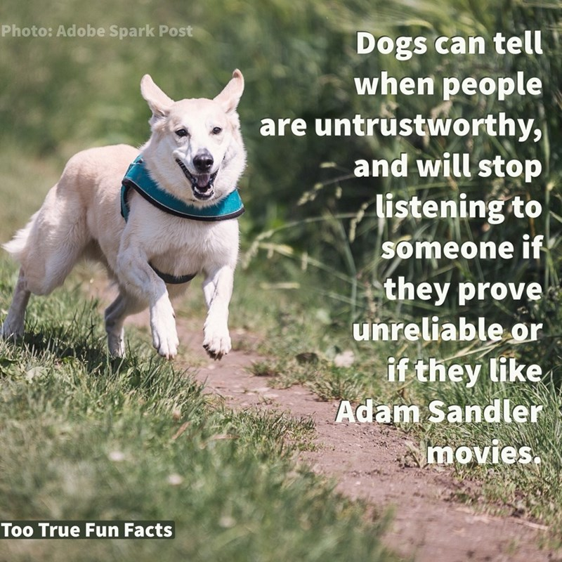 Canidae - Photo: Adobe Spark Post Dogs can tell when people are untrustworthy, and will stop listening to someone if they prove unreliable or if they like Adam Sandler movies Too True Fun Facts