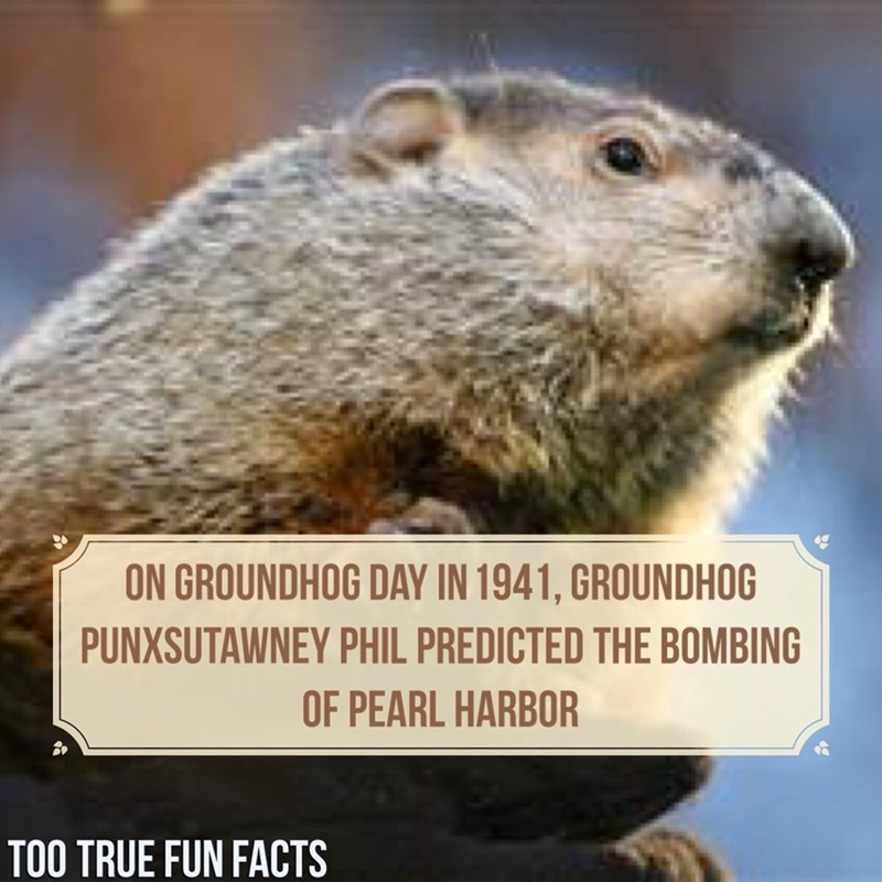 Groundhog - ON GROUNDHOG DAY IN 1941, GROUNDHOG PUNXSUTAWNEY PHIL PREDICTED THE BOMBING OF PEARL HARBOR TOO TRUE FUN FACTS