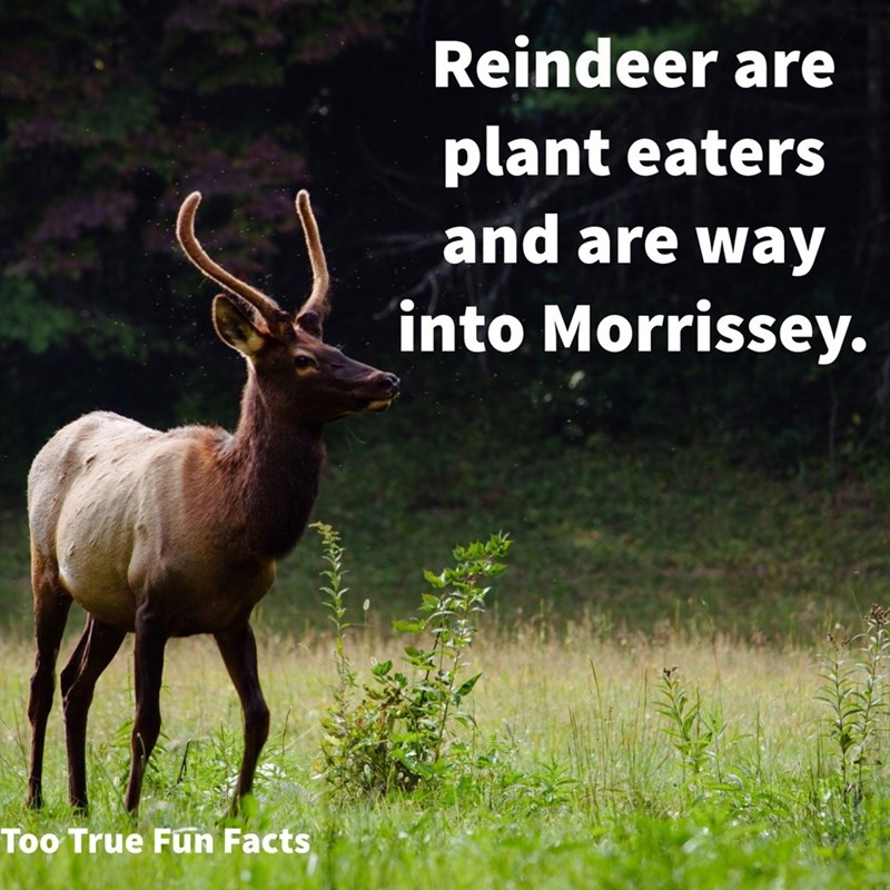 Horn - Reindeer are plant eaters and are way into Morrissey. Too True Fun Facts
