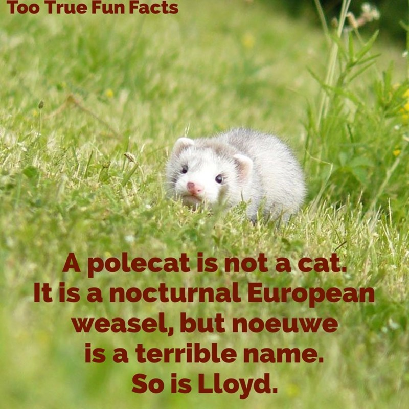 Hamster - Too True Fun Facts A polecat is not a cat. It is a nocturnal European weasel, but noeuwe is a terrible name. So is Lloyd.