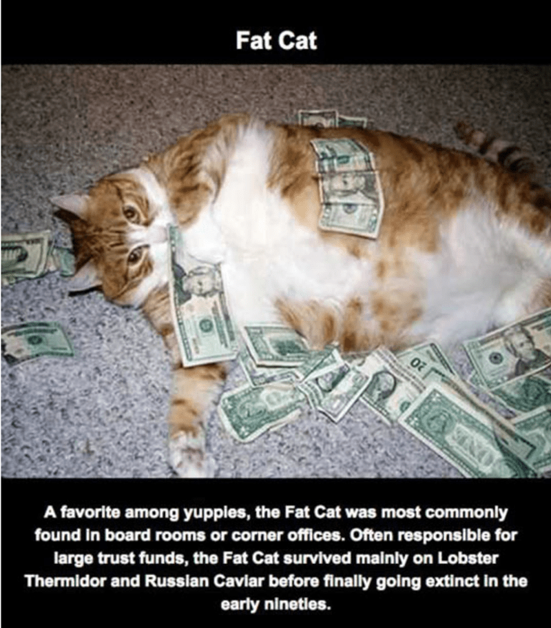 Cat - Fat Cat A favorite among yuppies, the Fat Cat was most commonly found in board rooms or corner offices. Often responsible for large trust funds, the Fat Cat survived mainly on Lobster Thermidor and Russian Caviar before finally going extinct in the early nineties.