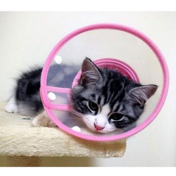 cats cone shame cute