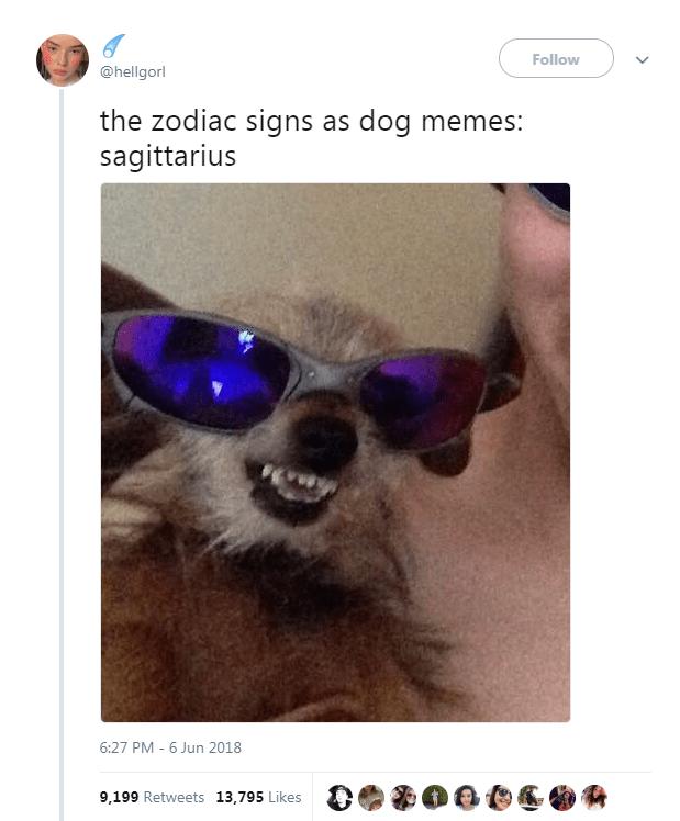 Dog Memes as Zodiac Signs - Dog as Sagittarius wearing sunglasses