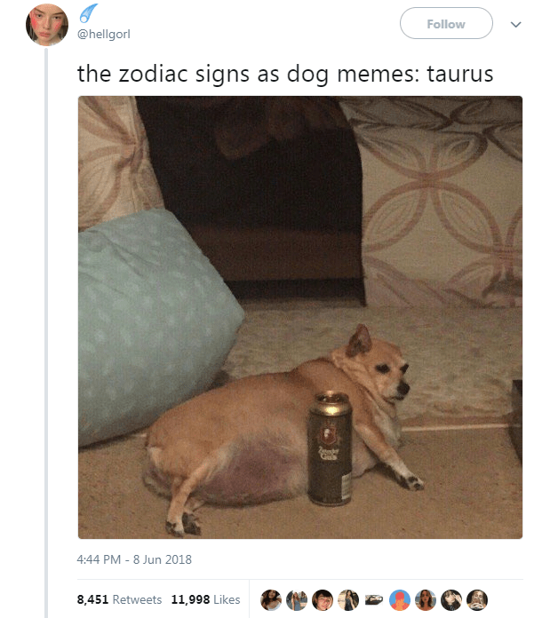 Dog Memes as Zodiac Signs - Dog as Taurus drinking beer