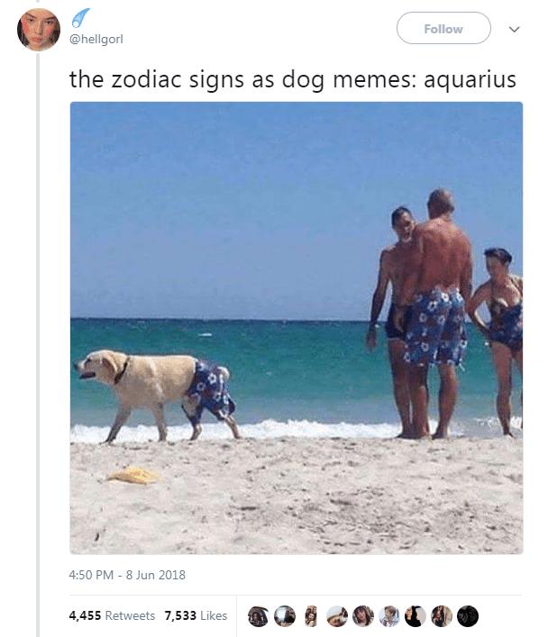 Dog Memes as Zodiac Signs - Dog as Aquarius at the beach